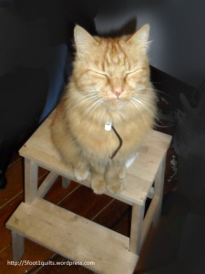 image of charlie on stool